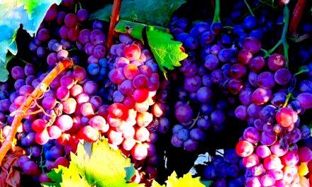 The Fruit of the Spirit: Remembering Wayne Van Gelderen Sr.